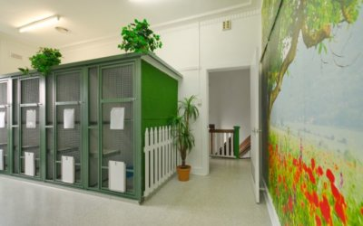 Kew Cattery has reopened!