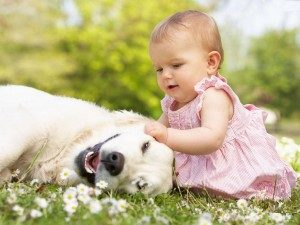 Babies and Pets, Safety Advice.