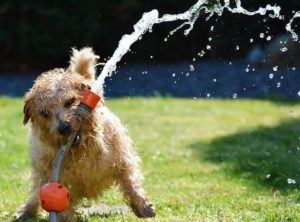 Helping Your Pets Handle The Heat