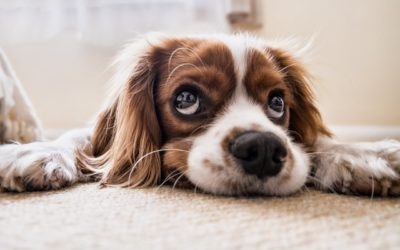 So your dog is anxious when left alone?